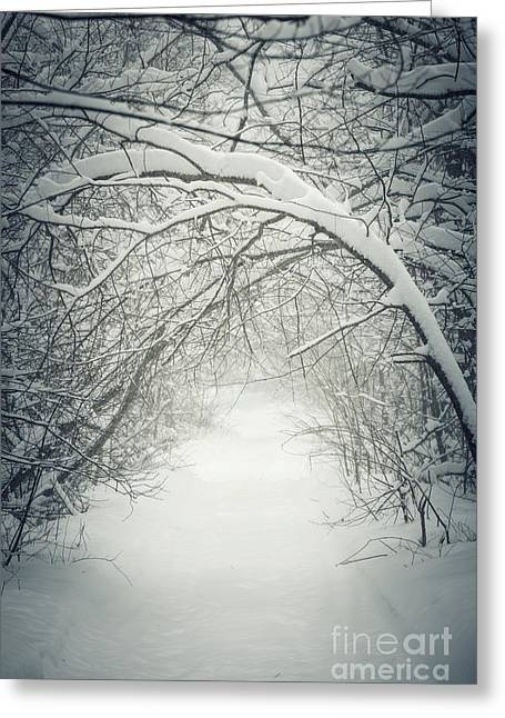 Snowstorm Greeting Cards - Snowy winter path in forest Greeting Card by Elena Elisseeva