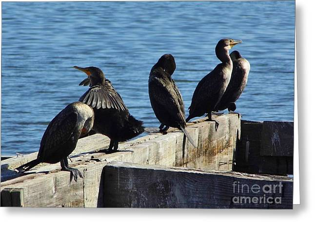 Cedar Key Greeting Cards - Soaking Up The Sun Greeting Card by D Hackett