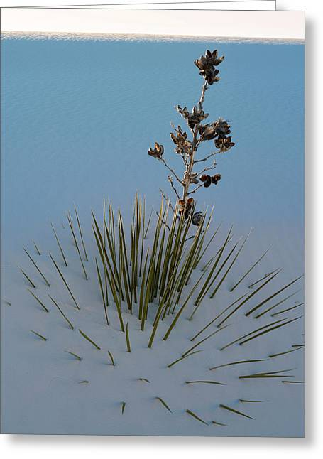 Soaptree Yucca Yucca Elata At Sand Greeting Card by Panoramic Images