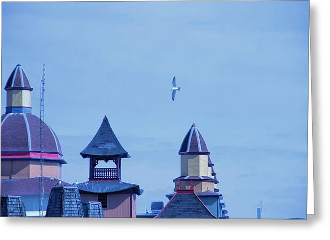 Flying Seagull Greeting Cards - Soar Greeting Card by Dan Sproul