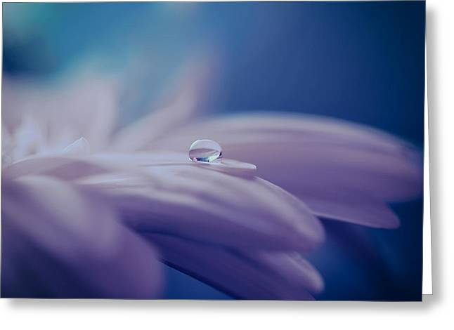 Morning Dew Greeting Cards - Soft is the Morning Dew Greeting Card by Mountain Dreams
