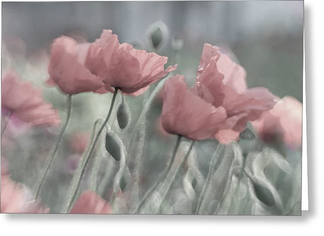 Softly Greeting Card by Anne Worner