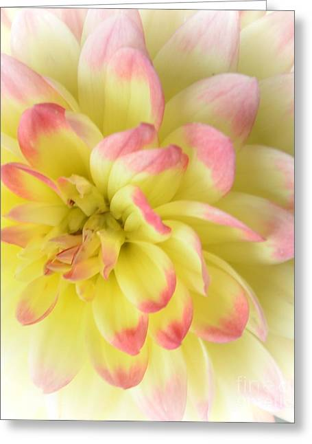 Struckle Greeting Cards - Softness Greeting Card by Kathleen Struckle