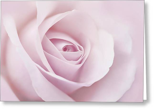 Square Format Greeting Cards - Softness of a Pink Rose Flower Greeting Card by Jennie Marie Schell