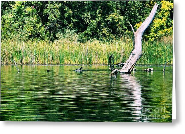 Solano Lake Greeting Card by Nancy Chambers