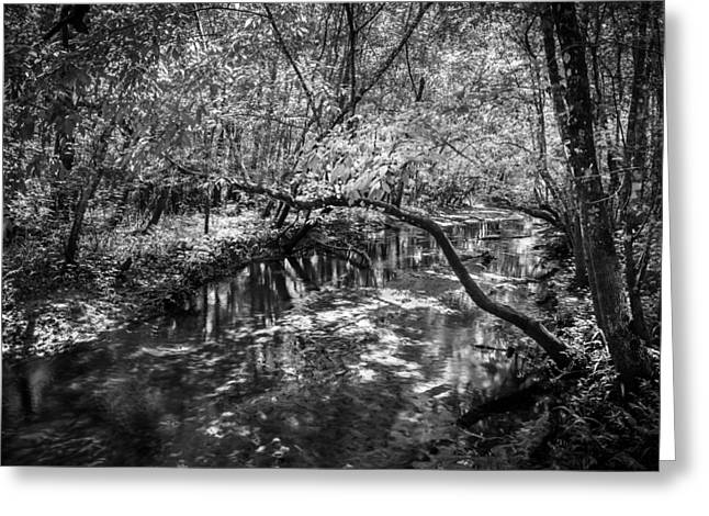 Environmental Center Greeting Cards - Soldiers Creek Seminole County Florida  BW Greeting Card by Rich Franco