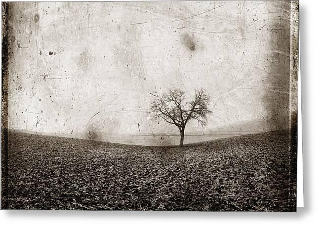 Solitary tree in Limagne landscape. Auvergne. France Greeting Card by BERNARD JAUBERT