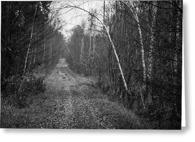 Deutschland Greeting Cards - Solitude Forest Greeting Card by Miguel Winterpacht