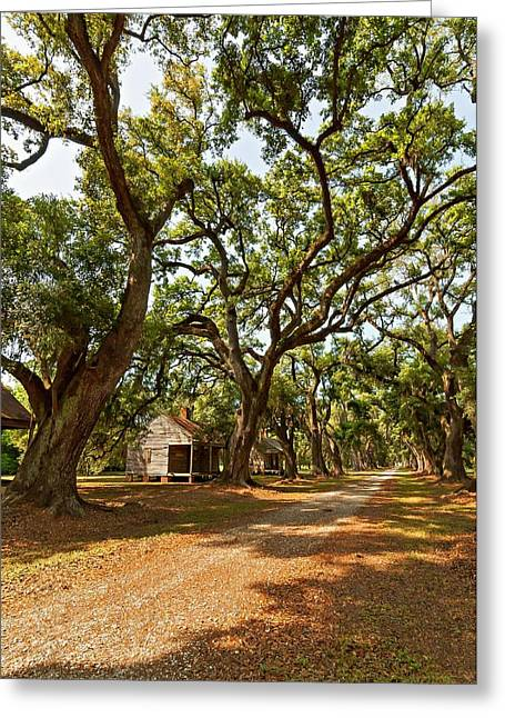 Slaves Photographs Greeting Cards - Southern Lane Greeting Card by Steve Harrington
