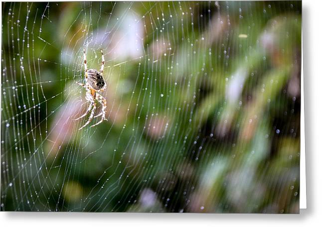 Keuka Greeting Cards - Spider in the Garden Greeting Card by Meegan Streeter