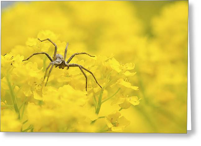 Tiny Photographs Greeting Cards - Spider Greeting Card by Jaroslaw Grudzinski