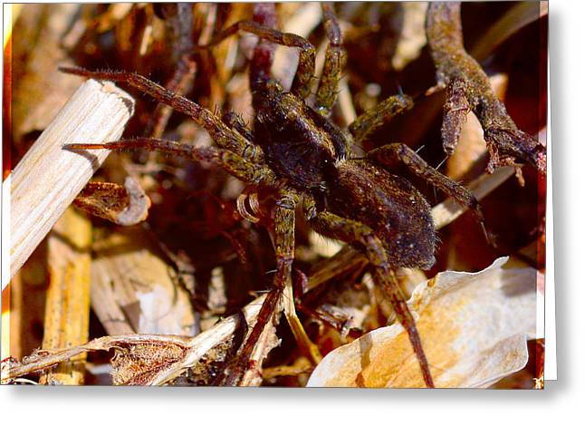 Arachnids Greeting Cards - Spider Greeting Card by Toppart Sweden