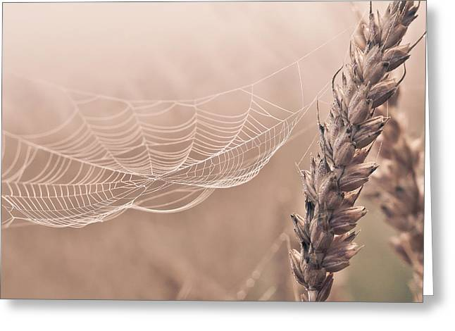 Agronomy Greeting Cards - Autumn spider web on grain Greeting Card by Aldona Pivoriene
