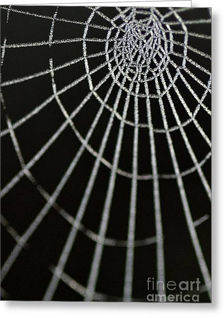 Predaceous Greeting Cards - Spider web with frost Greeting Card by Jim Corwin