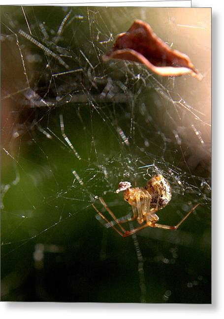 Spiderweb Greeting Card by Michele Embry
