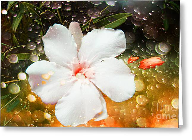 """flora Prints"" Greeting Cards - Splash of Color Greeting Card by Beverly Guilliams"