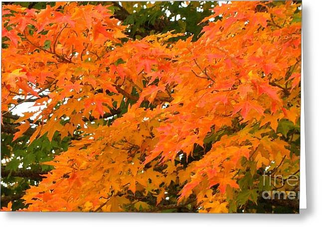 Autumn Photographs Mixed Media Greeting Cards - Splash of Fall Greeting Card by Beverly Guilliams