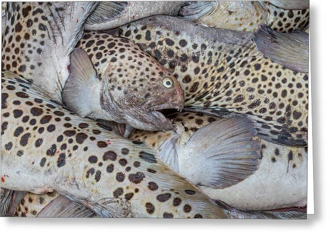 Icelandic Fish Greeting Cards - Spotted Wolffish, Iceland Greeting Card by Panoramic Images