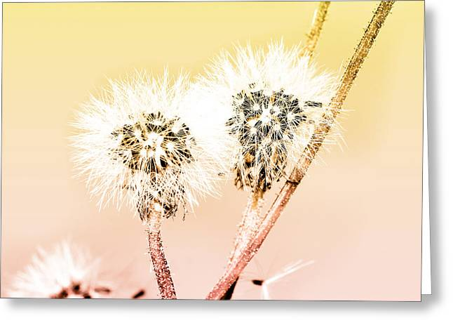 Single Mixed Media Greeting Cards - Spring dandelion Greeting Card by Toppart Sweden