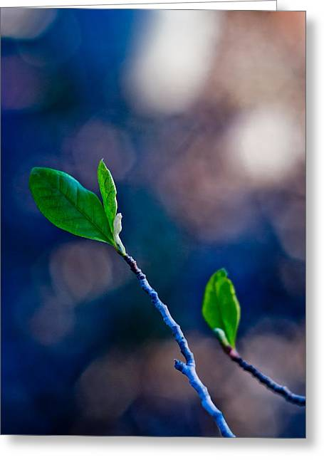 Blue And Green Digital Art Greeting Cards - Spring in Bloom Greeting Card by Linda Unger