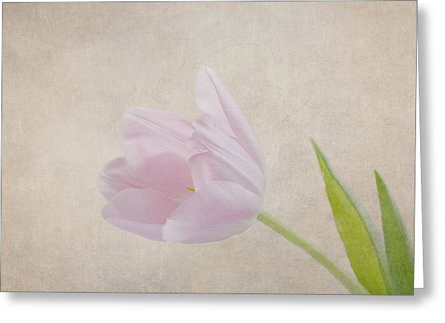 Kim Photographs Greeting Cards - Spring is in the Air Greeting Card by Kim Hojnacki