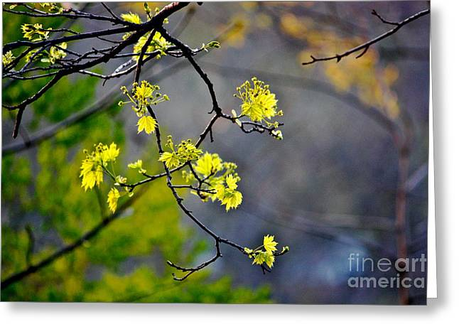 Spring Leaves Greeting Card by Jay Nodianos