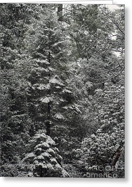 Snowstorm Greeting Cards - Spring Snowfall In The Sierra Foothills Greeting Card by Ron Sanford