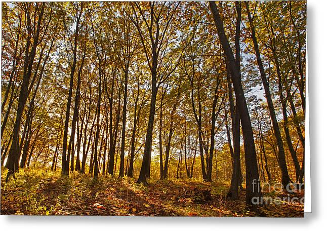 Western Ma Greeting Cards - Springside Park Greeting Card by Jonathan Welch