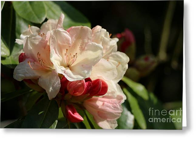 Subtle Colors Greeting Cards - Springtime Love Greeting Card by Christiane Schulze Art And Photography