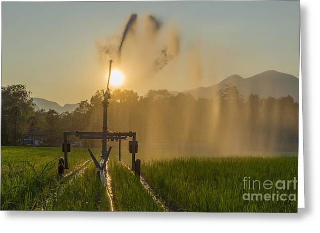 Ticino Canton Greeting Cards - Sprinkler irrigation Greeting Card by Mats Silvan