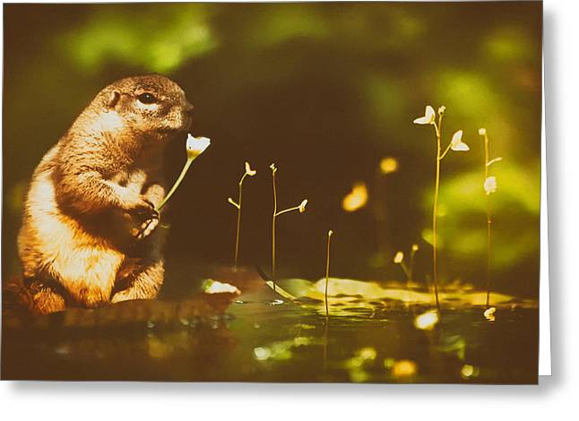 Squirrel With A Flowers Greeting Card by Mountain Dreams
