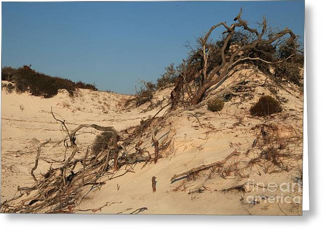 St Joseph Peninsula State Park Greeting Cards - St Joseph Sand Dunes Greeting Card by Adam Jewell