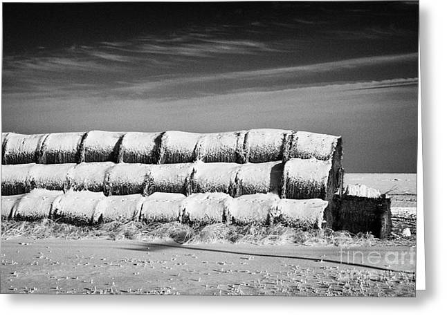 Snow Covered Field Greeting Cards - stack of frozen snow covered hay bales in a field Forget Saskatchewan Canada Greeting Card by Joe Fox