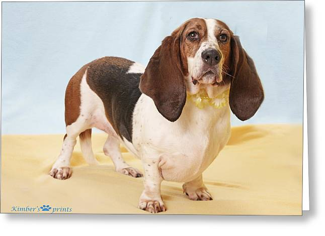 Basset Hound Greeting Cards Greeting Cards - Standing Proud Greeting Card by Kimber  Butler