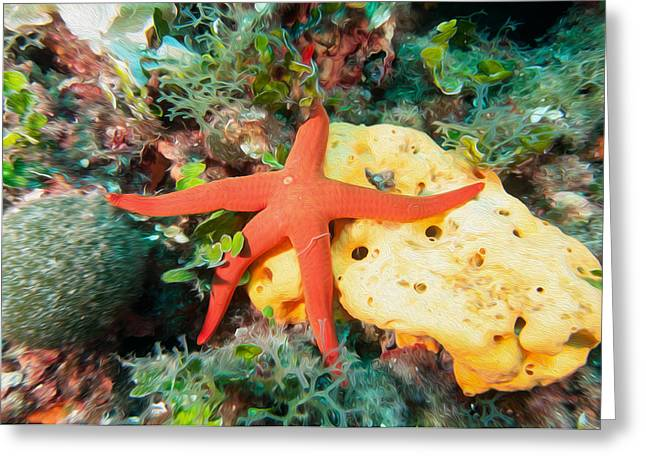 Pictures Sea Creatures Photographs Greeting Cards - Starfish Greeting Card by Roy Pedersen