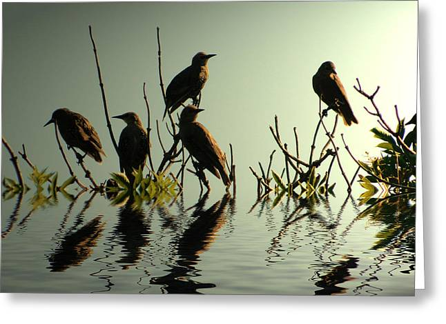 Starlings Greeting Cards - Starling Sunset Greeting Card by Sharon Lisa Clarke