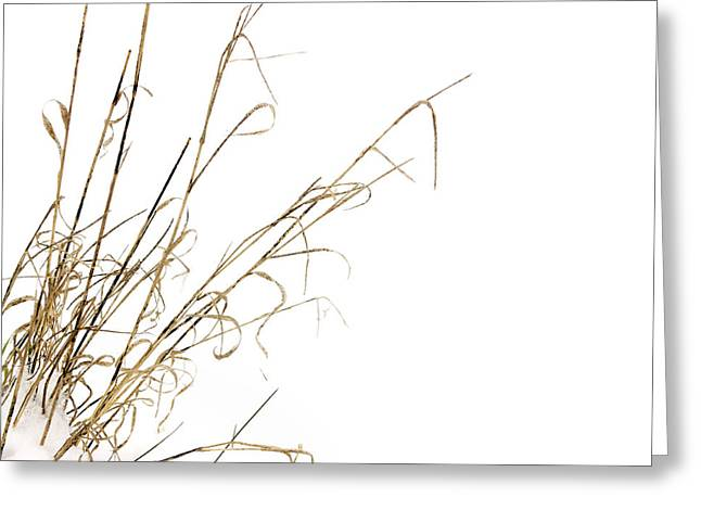 Temperature Greeting Cards - Stems in snow Greeting Card by Bernard Jaubert