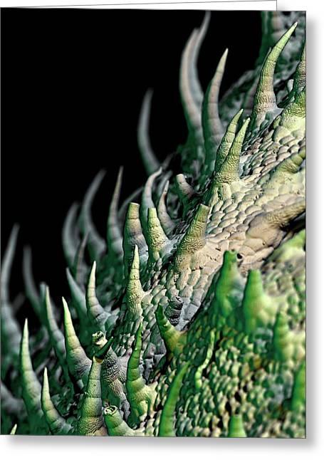 Stevia Leaf Trichomes Greeting Card by Stefan Diller