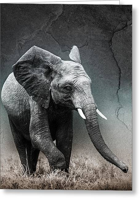 Multiple Exposures Greeting Cards - Stone Texture Elephant Greeting Card by Mike Gaudaur
