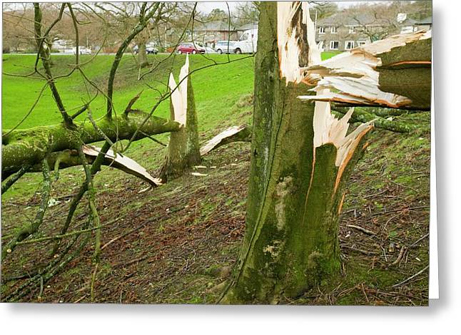 Storm Damage Greeting Card by Ashley Cooper