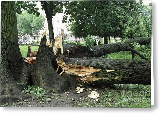 Storm Damage Greeting Cards - Storm Damage Greeting Card by RIA Novosti