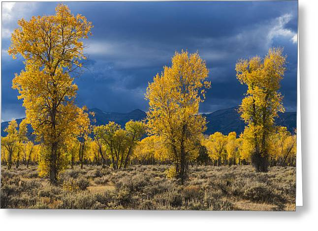 Grand Teton Photographs Greeting Cards - Storm Light Greeting Card by Joseph Rossbach