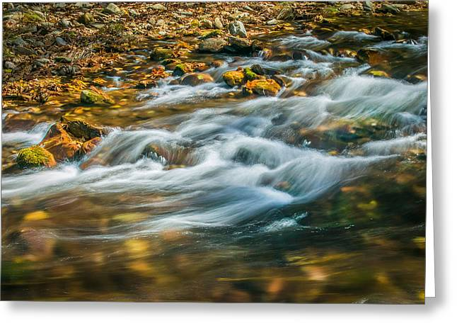 Tree Roots Greeting Cards - Stream Fall Colors Great Smoky Mountains Painted  Greeting Card by Rich Franco