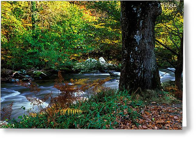 Autumn Colors Greeting Cards - Stream Flowing Through A Forest Greeting Card by Panoramic Images