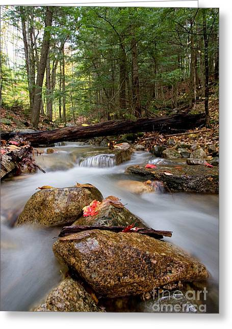 Water Flowing Greeting Cards - Stream Greeting Card by Gregory G. Dimijian, M.D.