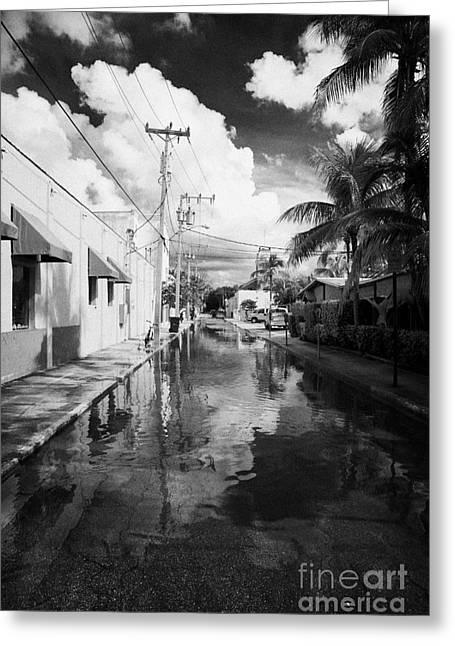 Flooding Greeting Cards - Streets Flooded By Heavy Rainfall Key West Florida Usa Greeting Card by Joe Fox