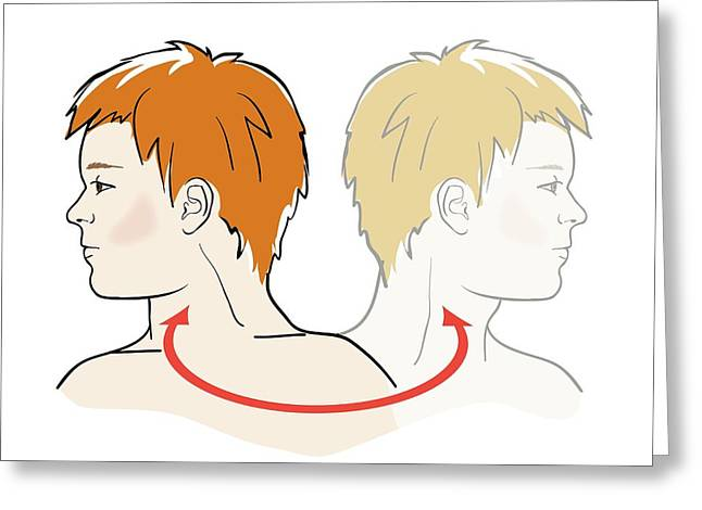 Stretching Neck Greeting Card by Jeanette Engqvist