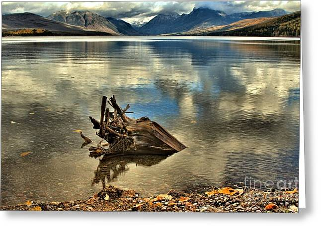 West Glacier Greeting Cards - Stumped Greeting Card by Adam Jewell