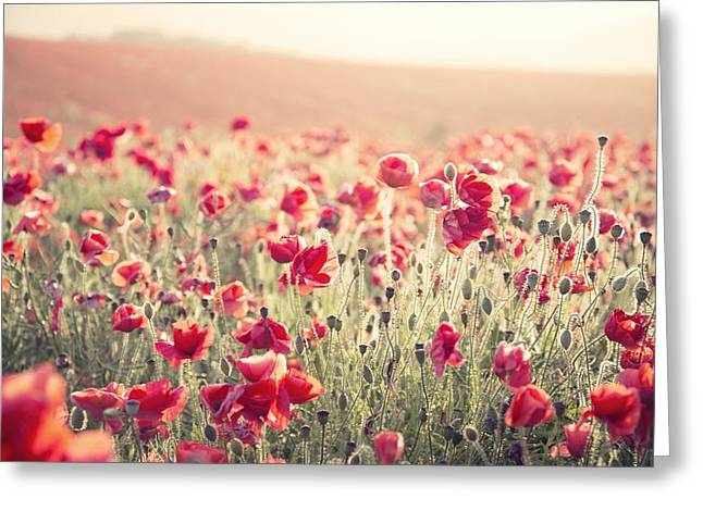 Process Greeting Cards - Stunning poppy field landscape under Summer sunset sky with cros Greeting Card by Matthew Gibson