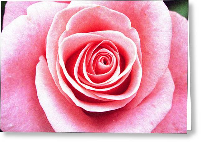 Stunning Roses Greeting Card by Jacqui Martin
